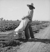 Mexican Farmworker